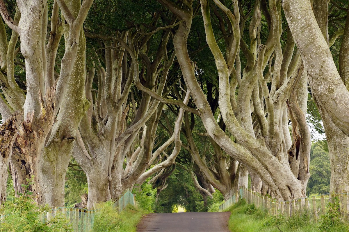Dark Hedges Ireland