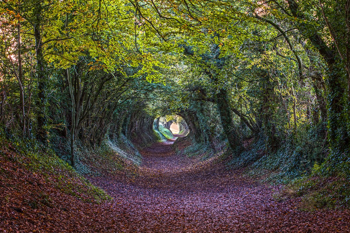 Halnaker Tree Tunnel