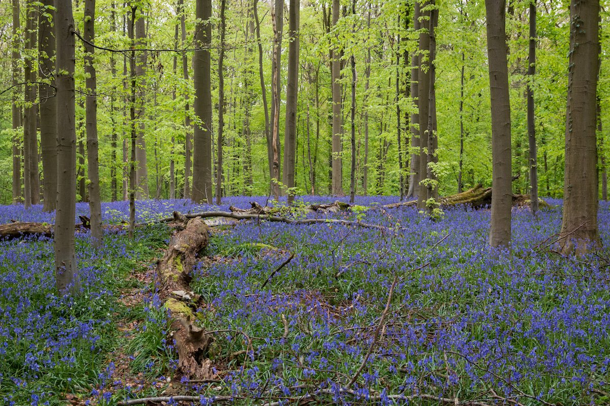 The Blue Forrest Belgium